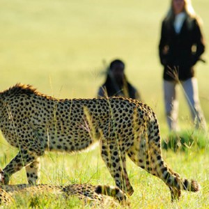 Shamwari Game Reserve - Luxury South Africa Honeymoon Packages - Leopard