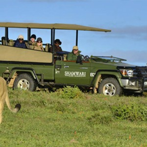 Shamwari Game Reserve - Luxury South Africa Honeymoon Packages - Lion
