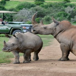 Shamwari Game Reserve - Luxury South Africa Honeymoon Packages - Rhinos