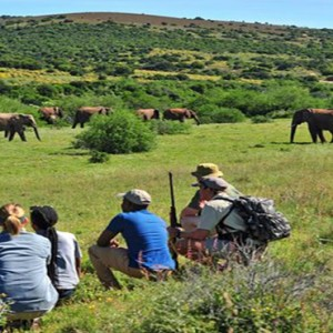 Shamwari Game Reserve - Luxury South Africa Honeymoon Packages - walking safari