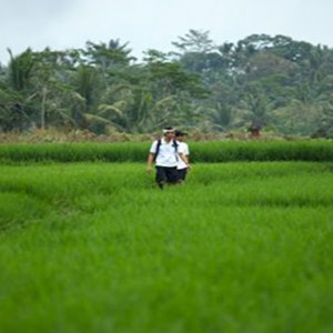 Bali Honeymoon Packages The Samaya Ubud Rice Paddy Fields