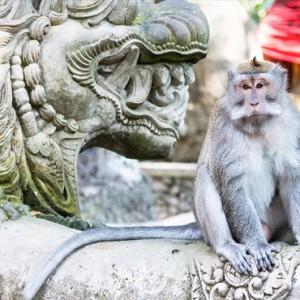 Bali Honeymoon Packages The Samaya Ubud Ubud Monkey Forest