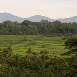 Bali Honeymoon Packages The Samaya Ubud United With Nature