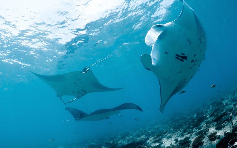 Kuramathi Island Honeymoon Packages Diving
