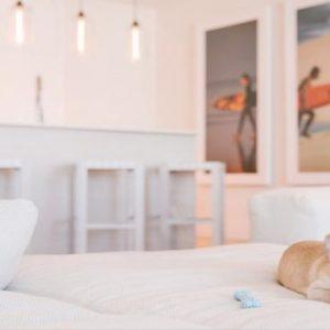 Miami Honeymoon Packages W South Beach Miami Pet Friendly
