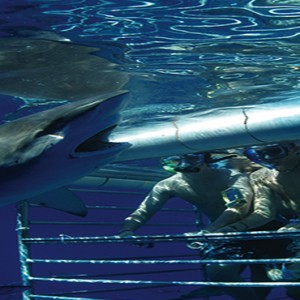 South Africa Honeymoon Packages Victoria And Alfred Hotel, Cape Town Shark Cage Diving Adventures