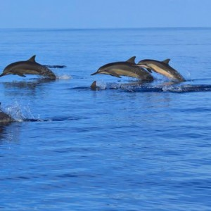 Maldives Honeymoon Packages Angsana Velavaru Watersports 3