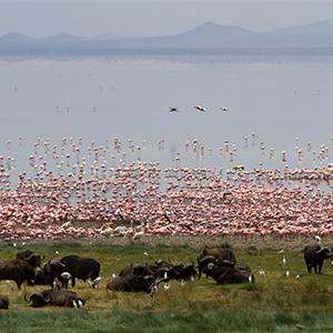Zanzibar Honeymoon Packages Honeymoon Multi Centre Packages Lake Manyara