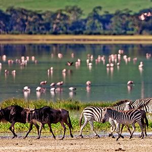 Zanzibar Honeymoon Packages Honeymoon Multi Centre Packages Ngorongoro