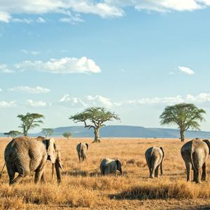 Zanzibar Honeymoon Packages Honeymoon Multi Centre Packages Serengeti