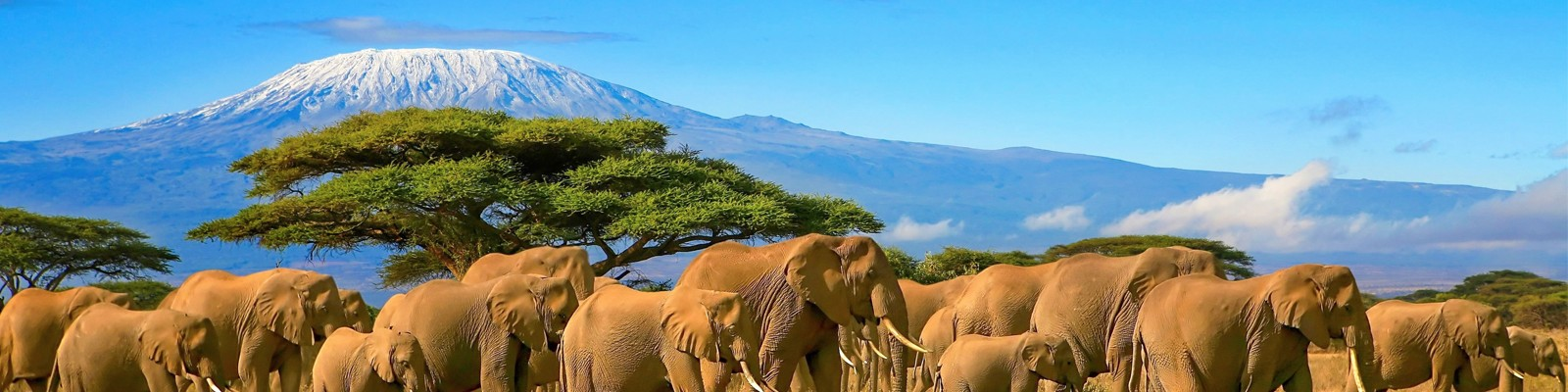 Tanzania Honeymoon Packages Safari Honeymoon Packages