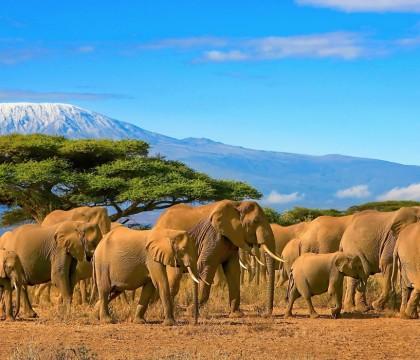 a picture of Tanzania