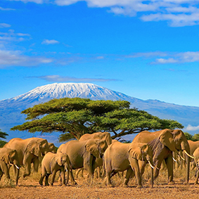 Tanzania Honeymoon Packages Safari Honeymoon Packages Thumbnail