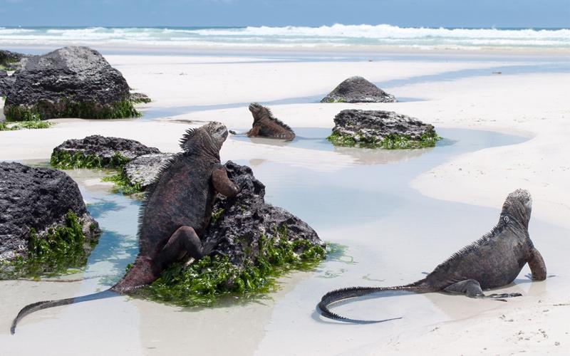 Bucket List Honeymoons Galapagos Islands