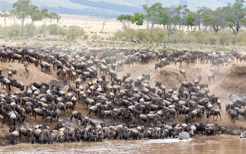 Bucket List Honeymoons Serengeti Big Migration