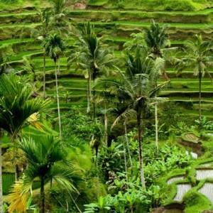 Bali Honeymoon Packages The Chedi Club Tanah Gajah, Ubud Rice Fields
