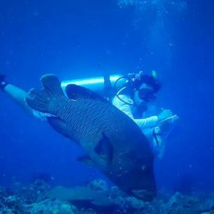 Maldives Honeymoon Packages SAii Lagoon Maldives, Curio Collection By Hilton Scuba Diving