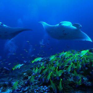Maldives Honeymoon Packages Raffles Maldives Meradhoo Marine Life
