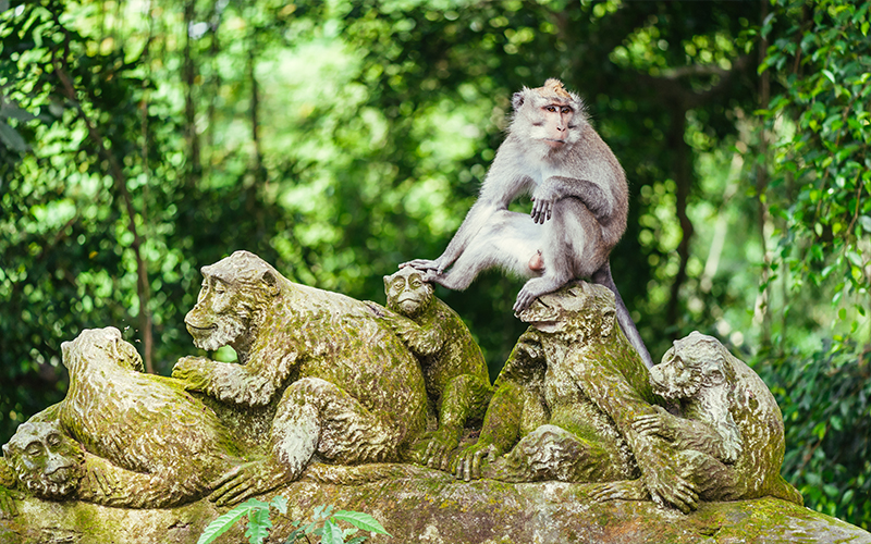 Romantic Things To In Bali Sacred Monkey Forest