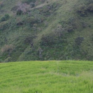 Sri Lanka Honeymoon Packages 98 Acres Resort & Spa Nature Walk