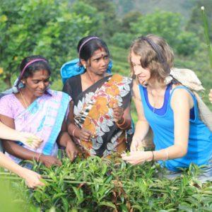 Sri Lanka Honeymoon Packages 98 Acres Resort & Spa Tea Plucking