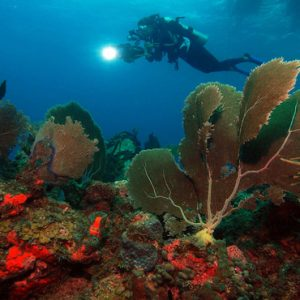 Nevis Honeymoon Packages Oualie Beach Resort Scuba Diving