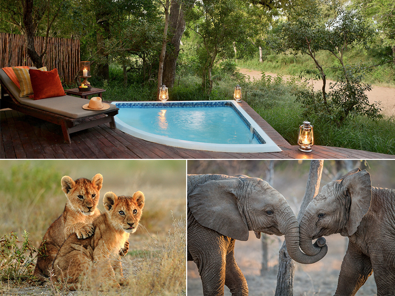 Top 10 Things To Do On Your South Africa Honeymoon Kruger National Park