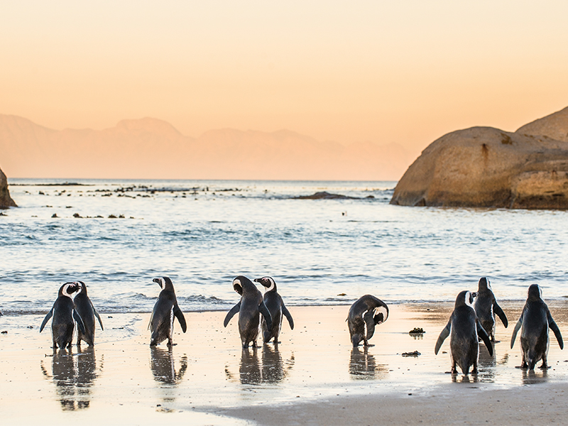 Top 10 Things To Do On Your South Africa Honeymoon Penguins