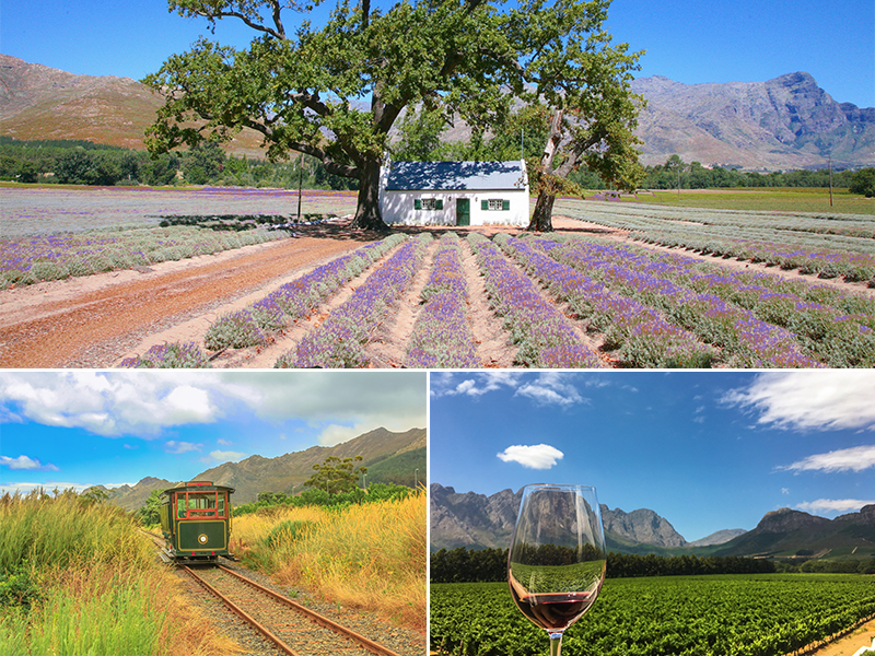 Top 10 Things To Do On Your South Africa Honeymoon Winelands