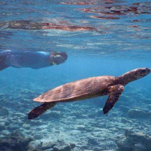 Maldives Honeymoon Packages Reethi Faru Resort Snorkeling
