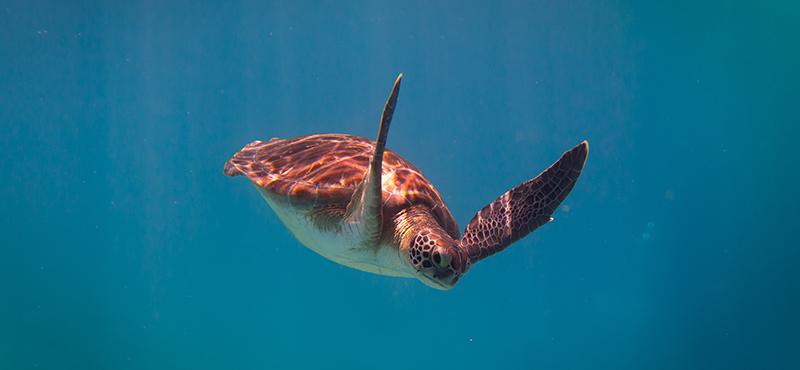 Barbados Turtle Cruise Barbados Honeymoon Things To Do