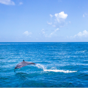 St Lucia Honeymoon Packages - Whale Watching and Dolphin Spotting Cruise from the North Island - thumbnail