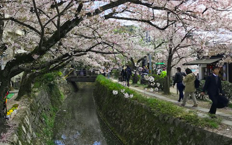 Holly's Japan Experience Philosopher's Path