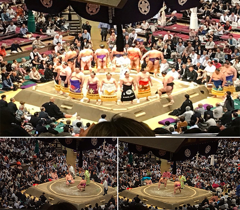Holly's Japan Experience Sumo Wrestling1