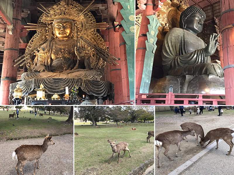 Holly's Japan Experience Nara Temples And Deers