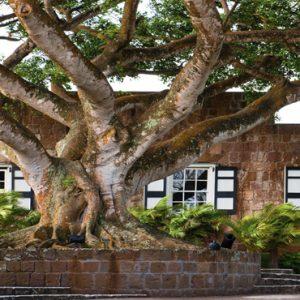 Nevis Honeymoon Packages Paradise Beach Nevis Resort Tree In Hotel