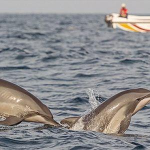 Sri Lanka Honeymoon Packages Dolphin Beach Resort Kalpitiya Dolphins
