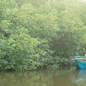 Sri Lanka Honeymoon Packages Dolphin Beach Resort Kalpitiya Lagoon Tour