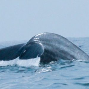 Sri Lanka Honeymoon Packages Dolphin Beach Resort Kalpitiya Whale Watching