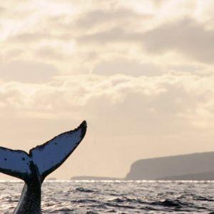 Hawaii Honeymoon Packages Four Seasons Resort Lanai Whales In Sea
