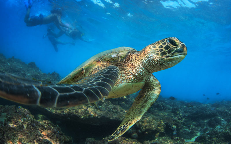 10 Reasons To Visit The Cook Islands Time Out With The Turtles