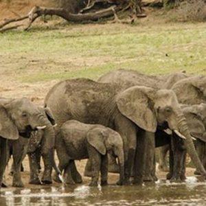 South Africa Honeymoon Packages Elandela Private Game Reserve Elephants
