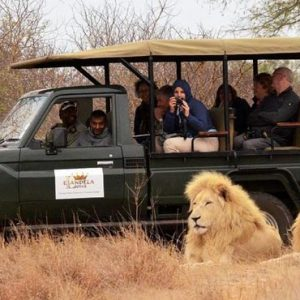 South Africa Honeymoon Packages Elandela Private Game Reserve Game Safari