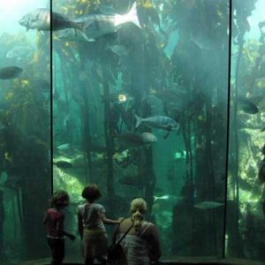South Africa Honeymoon Packages The Commodore South Africa Two Oceans Aquarium