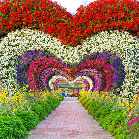 Dubai Honeymoon Packages Dubai Miracle Garden Thumbnail