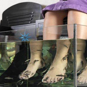 Mexico Honeymoon Packages Hard Rock Hotel Riviera Maya Fish Therapy