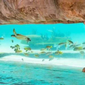 Bahamas Honeymoon Packages Grand Hyatt Baha Mar Underwater Pool