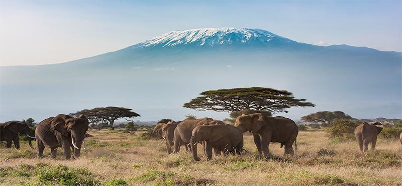 Best Destinations For A Safari And Beach Honeymoon Amboseli National Park