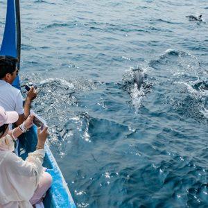 Maldives Honeymoon Packages Fairmont Maldives Sirru Fen Fushi Dolphin Watching