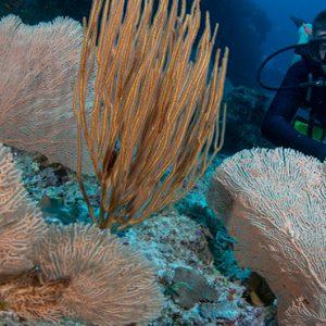 Maldives Honeymoon Packages Fairmont Maldives Sirru Fen Fushi Scuba Diving